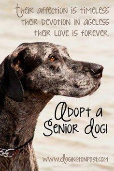 November is Adopt-a-Senior-Pet Month!