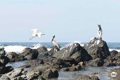 Soy diferente ! alltroncones alltroncones alltroncones alltroncones #Troncones #Ixtapa #Zihuatanejo #Guerrero #Mexico #playa #vacaciones #alltroncones #surf #surfers #Photography #nature #ocean #playatroncones #tronconesbeach #Tours #ecoturism #ecoturismo #beachtours #surflessons #turtle #turtlerelease #holidays #birds #birdswatching #birdsphoto