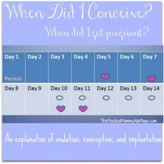 Learn about how ovulation, conception, and implantation occurs during a woman's monthly cycle.