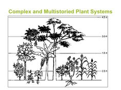 Permaculture Agro-forestry layers