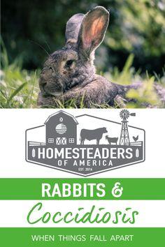 Meat Rabbits, Raising Rabbits, Cups Writing, When Things Fall Apart, Young Rabbit, Rabbit Farm, Modern Homesteading, Disaster Preparedness, Hobby Farms