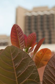 Watterson Towers is seen behind plants on the Illinois State University campus.