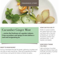 Cucumber Ginger Mint - carries the freshness of a garden indoors.