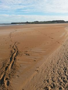 The beach at Dunbar goes on for ever and ever.  http://www.belhavenfruitfarm.co.uk/the-store.aspx