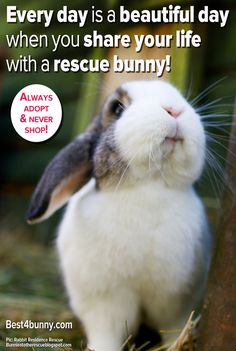 Every day is a beautiful day when you share your life with a rescue bunny! ~ my Shadow is a rescue bunny :-) Funny Rabbit, Funny Bunnies, Pet Rabbit, Baby Bunnies, Cute Bunny, Bunny Pics, Adopt A Bunny, Bunny Rescue, Rabbit Pictures