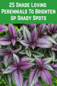 Shade Plants Container, Flowering Shade Plants, Shade Garden Plants, Shade Perennials, Foliage Plants, Shaded Garden, Flowers Perennials, House Plants, Plants That Love Shade