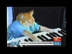 World-first cat video film festival