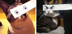 "There's a brilliant new trend in Japan that has cat owners placing strips of paper with cartoon or anime eyes in front of their cats to give them goofy expressions. It's called the ""cat montage"" (neko montaaju) and it's hilarious."