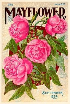 """The Mayflower"" magazine cover - September 1899"