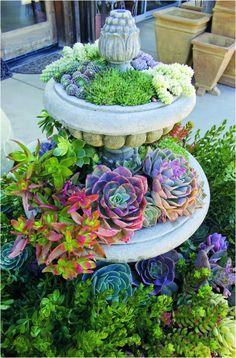 Клумба из многолетних цветов и суккулентов в заброшенном фонтане