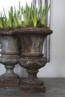 Lovely urns filled with forced bulbs. www.BellaRusticaDesign.com