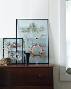A Modern Way to Display Pressed Botanicals. Start by gathering some dried flowers or leaves. Next gather 2 clear panes of glass and clean them well. Arrange your plant material as you would display it and dab a wee bit of white glue to keep the pieces in place. Add second glass pane to the back of the first, sandwiching in the plants, and use friction tape or binder clips to secure it.