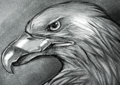 how to draw an eagle eye