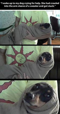 Stuck in a sweater… not only the dogs expression is hilarious but the suns too!