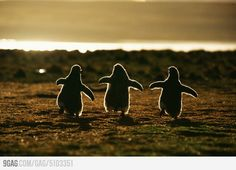 3 Penguins