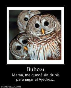 Buho21+Mamá,+me+quedé+sin+clubis+para+jugar+al+Ajedrez...