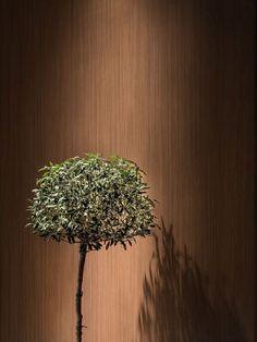 Studio design | seaview Studio Design, Dandelion, Flowers, Plants, Decor, Decoration, Dandelions, Plant, Decorating