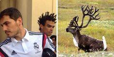 La nouvelle coupe de cheveux de Pepe parodiée - http://www.actusports.fr/113719/nouvelle-coupe-cheveux-pepe-parodiee/