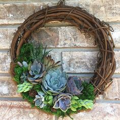 """10 """"Lively Succulent Wreath (Made to Live juicy wreath made to orderNo wish . Have you already made your perfect succulent wreath? Succulent Landscaping, Succulent Gardening, Succulent Terrarium, Succulents Garden, Succulent Outdoor, Indoor Succulents, Propagating Succulents, Outdoor Plants, Indoor Outdoor"""