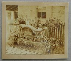 vintage pug pictures | Antique_Pug_Photograph_With_Carriage