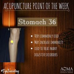 #TipTuesday: #Acupuncture Poibt of the Week, Stomach 36! ☺️#integrativelife