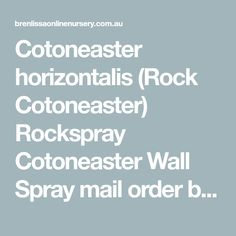 Cotoneaster horizontalis (Rock Cotoneaster) Rockspray Cotoneaster  Wall Spray  mail order buy online plants for sale climbers creepers fruiting herbs Melbourne, Ballarat, Victoria, Creswick, Daylesford | Brenlissa Online Nursery