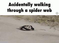 assada no asfalto