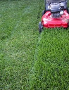 Cutting your lawn at the right mowing height is the single most important thing you can do to keep your lawn healthy. Mowing at the correct height reduces weed problems, contributes to a healthy root system and increases resistance to drought. No Mow Grass, Planting Grass, Best Lawn Mower, Lawn Mower Tractor, Jm Barrie, Yard Maintenance, Lawn Care Tips, Pergola Pictures, Lush Lawn