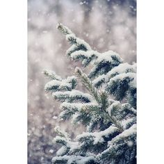 Sweater Weather ❤ liked on Polyvore featuring backgrounds, pictures, christmas, photos and winter
