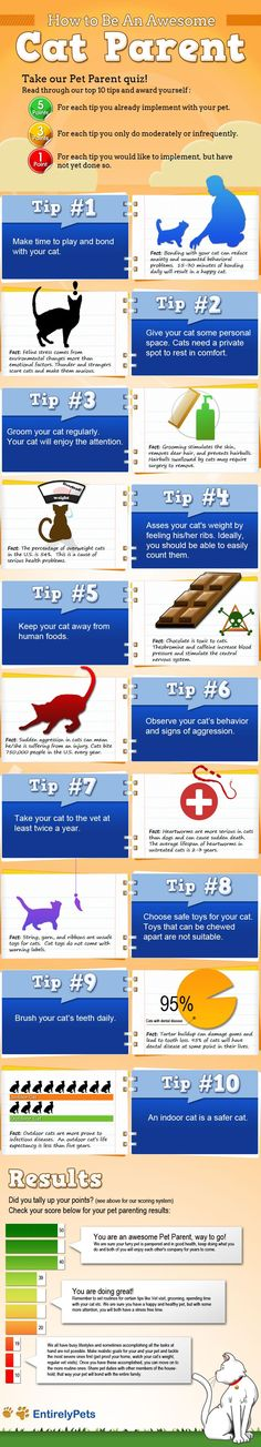 TwitterFacebookWhatsAppGoogle+LinkedInDiscover new TIPS! Discover new TIPS! Published by: EntirelyPets.com Original source: here TIPS FOR: cats, pets, pets and animals Related posts Make Some Noise: A Guide to Helping Animals, Peta Style Which Furry Friend Is Improving Your Health? How to Raise a Kitten: What to Expect in the First Year