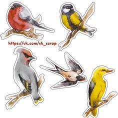 Осенний набор, птицы