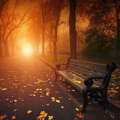 Bench In Foggy Autumn Park - Sergiy Trofimov 25 Beautiful Autumn pictures - purple leaves Fall Images, Fall Pictures, Fall Pics, Special Pictures, Fall Photos, Sunset Boulevard, Landscape Photography, Nature Photography, Landscape Photos