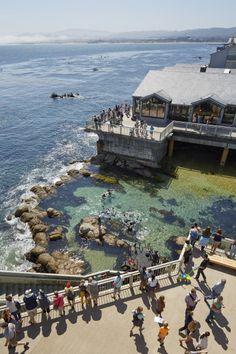 The Monterey Bay Aquarium located on Cannery Row~Image via Architect Magazine