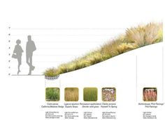 Meadow in Autumn - Design - Santa Monica Civic Center Parks