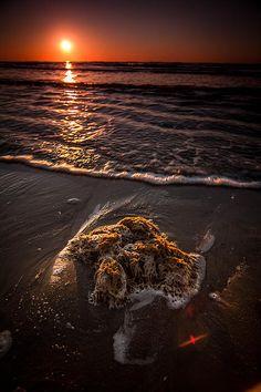 Debris From the Sea