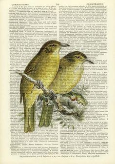 birds - 18oo's Bulbul Songbird artwork - printed on page from old dictionary