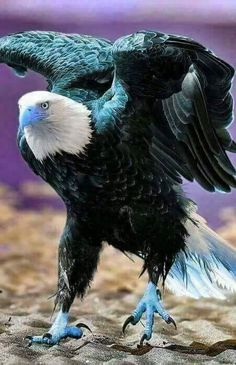 My fave colour Pretty Birds, Beautiful Birds, Animals Beautiful, Eagle Images, Eagle Pictures, Nature Animals, Animals And Pets, Cute Animals, Exotic Birds