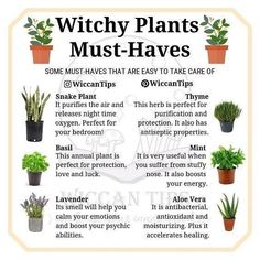 Wicca Do you grow plants at your home? I'd love to have a big garden one day but for the moment I ju Green Witchcraft, Wiccan Witch, Magick, Witchcraft Herbs, Wiccan Spells, Pagan Yule, Healing Spells, Candle Spells, Magic Herbs