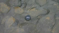 Photo issued by the British Museum on Feb. 7, 2014, show of some of the human footprints, thought to be more than 800,000 years old, found in silt on the beach at Happisburgh on the Norfolk coast of England, with a camera lens cap laid beside them to indicate scale.    1 hr ago |By Jill Lawless of Associated Press share    603  tweet