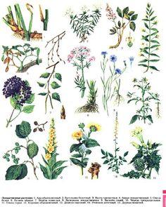 Лекарственные растения Flora, Plants, Plant, Planets