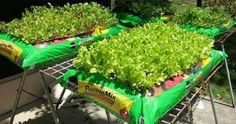 Não tem espaço para plantar? Aprenda uma forma simples de cultivar suas verduras mesmo sem espaço