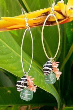 Zebra Shell Sea Glass Pink Coral Shell Earrings on Etsy, $22.00