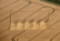 Crop Circle at Devil's Den, nr Fyfield, Wiltshire. Reported 12th August 2012.