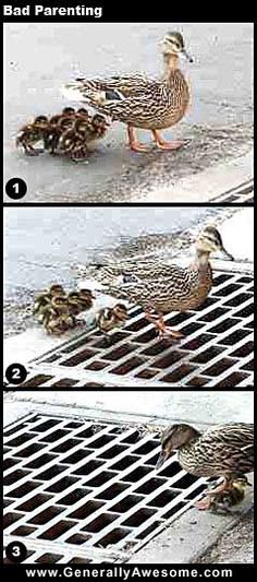 I really want to believe the photographer then helped rescue the missing ducklings.