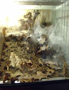 terrario tarantula