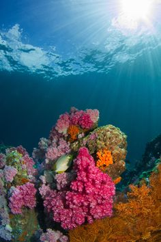 Delicate ecosystems underwater in coral reefs are threatened by rising sea temperatures. Can we do more to save them? Marine Photography, Close Up Photography, Underwater Photography, Ocean Underwater, Underwater Pictures, Under The Water, Under The Sea, Shoal Of Fish, Beautiful Sea Creatures
