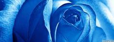 flowers blue rose facebook cover