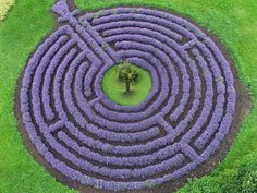 Labyrinth by Prince of the Garden