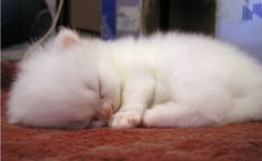 adorable kitten sleeping