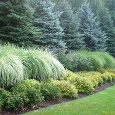 Foundation Plantings Design Ideas, Pictures, Remodel, and Decor - page 7 The textural contrast between the conifers and the grasses is wonderful!